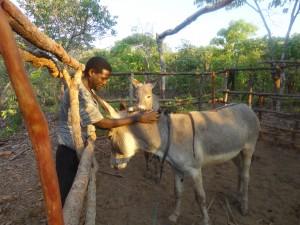 GLM Zambia donkeys