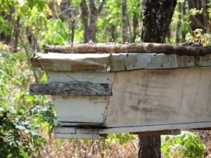 Green Living Movement Beekeeping